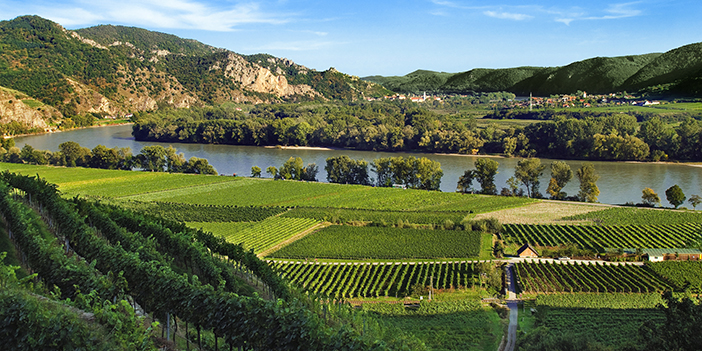 Danube Vineyards